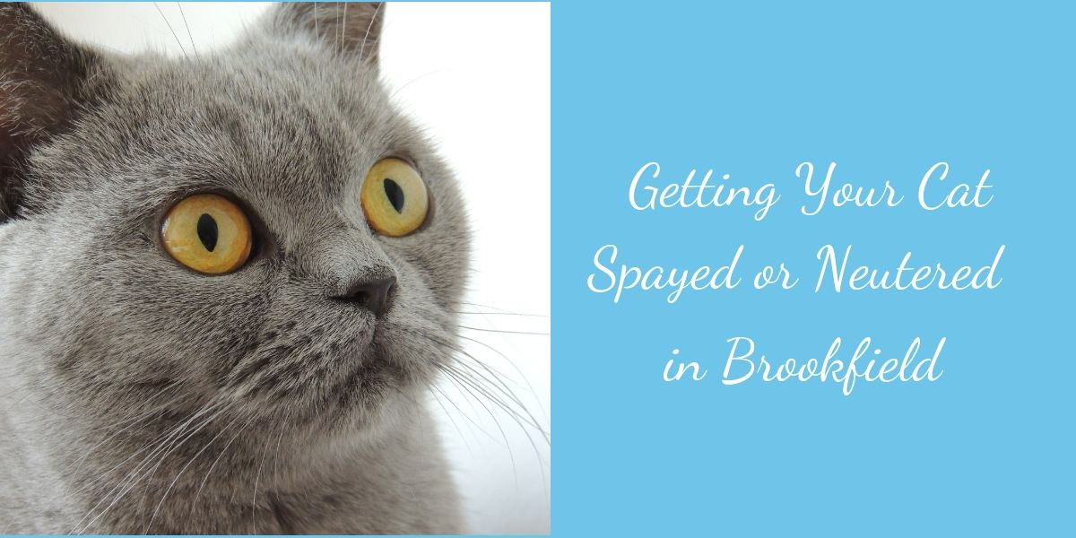 Cat spay and neuter Brookfield