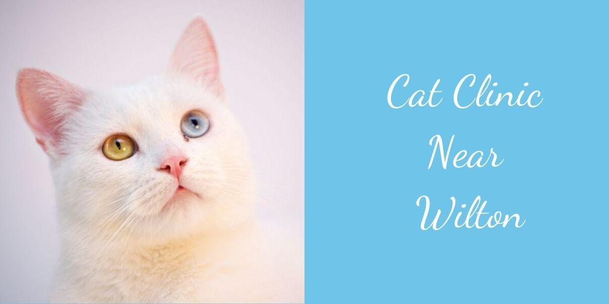 Cat-Clinic-Near-Wilton