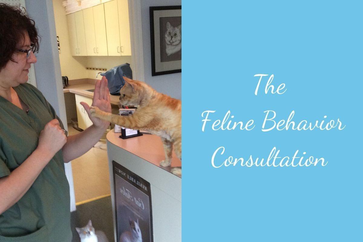 The-Feline-Behavior-Consultation-