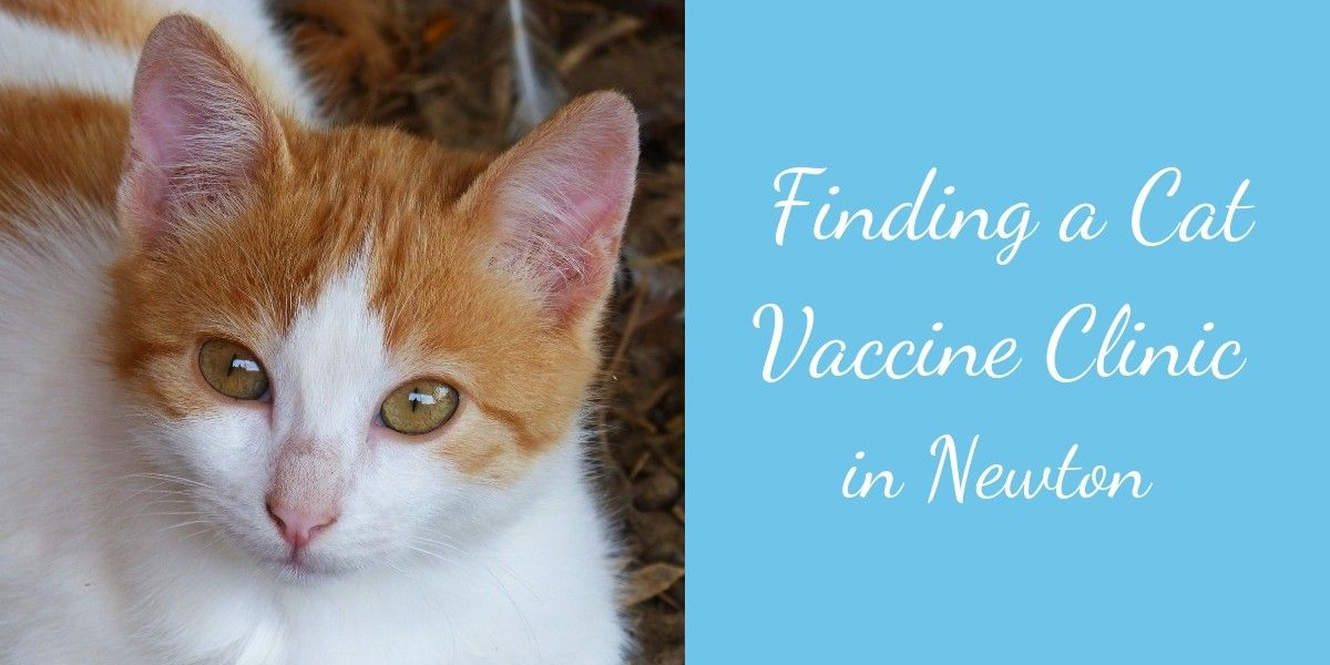 Finding-a-Cat-Vaccine-Clinic-in-Newton-1