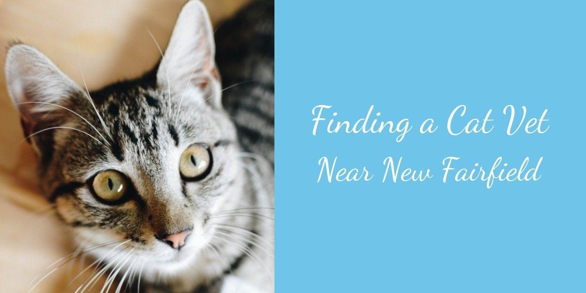 Finding-a-Cat-Vet-Near-New-Fairfield